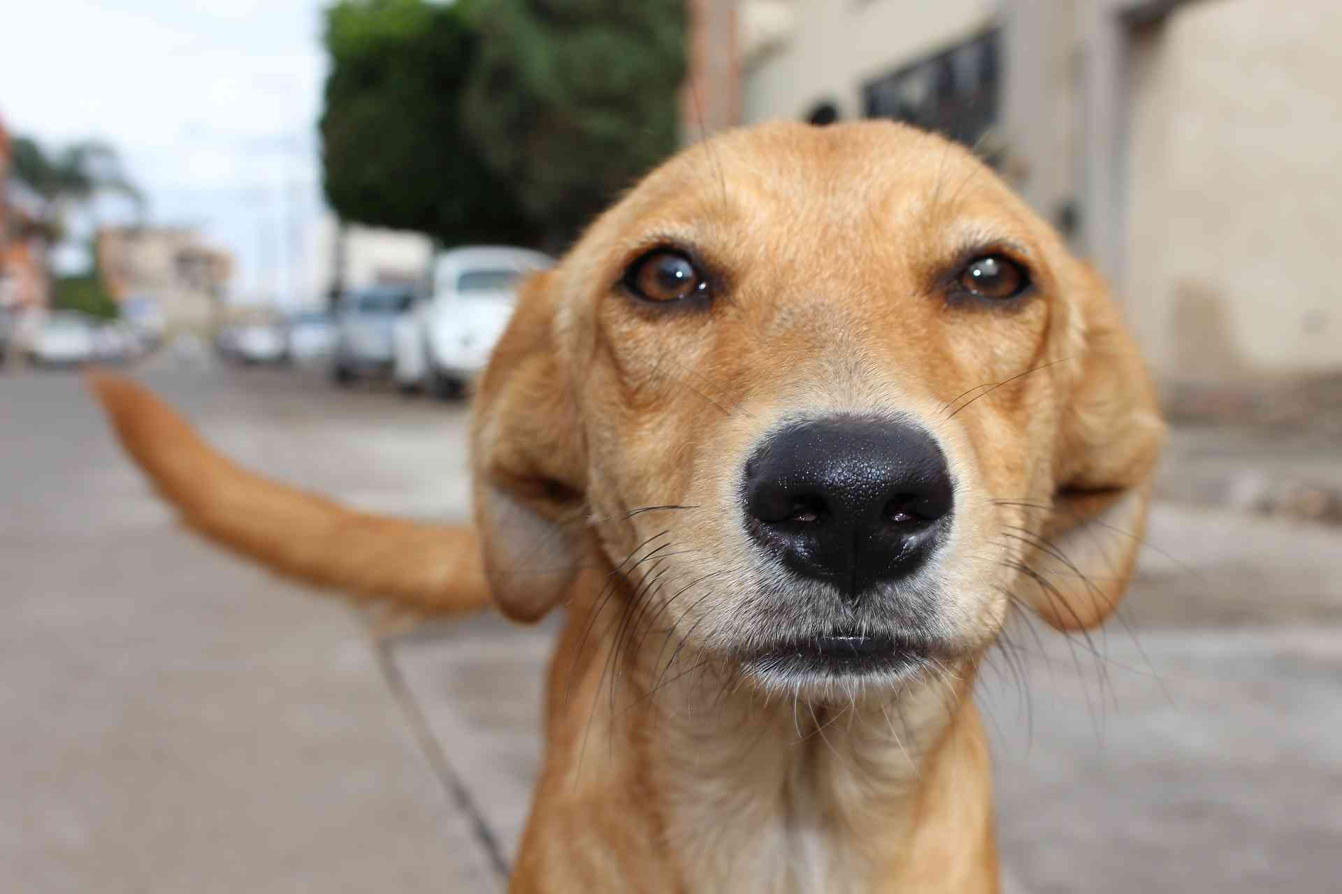 Viernes 7: Castraciones de perros y gatos en el Refugio Helvético